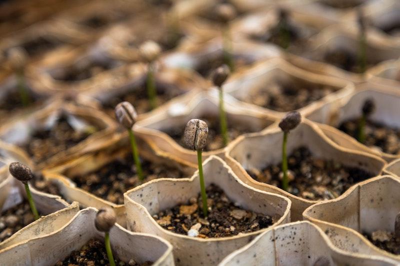 compost nourrir plantes